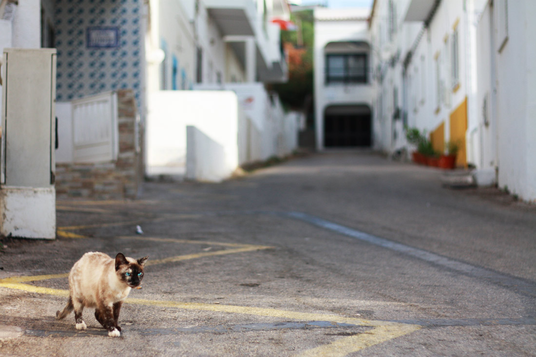 algarve-praia-olhos-d'agua-portugal-cliff-travelblog-city-white-house-cat